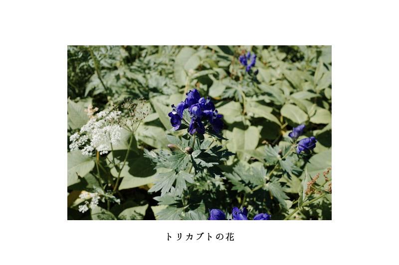 07_torikabuto